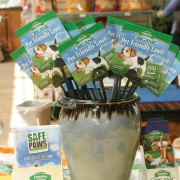 cat grass care instructions