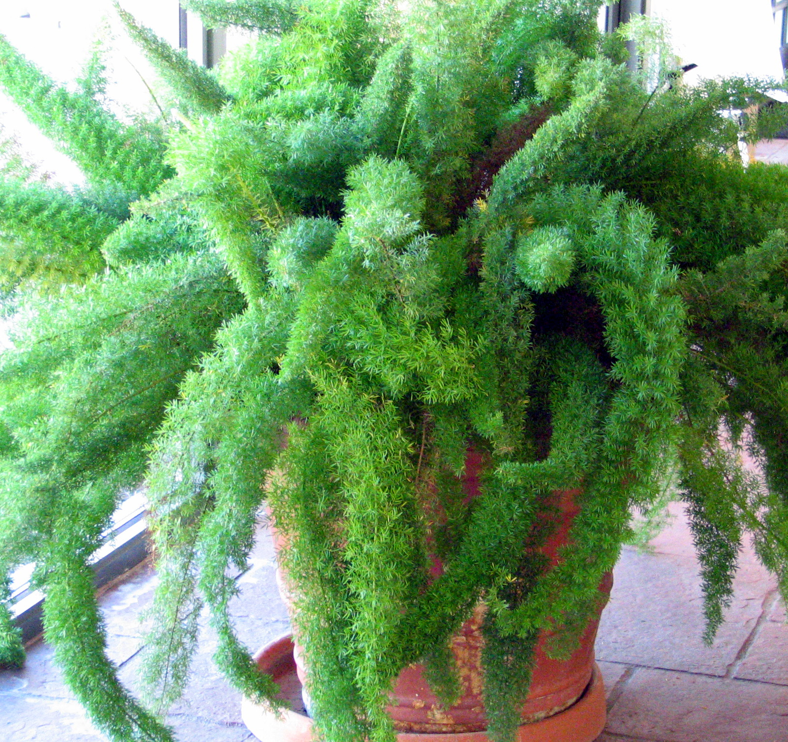 indoor fern care instructions