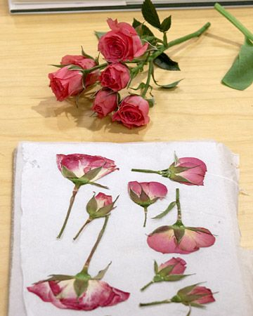 silica gel flower drying instructions